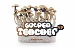 100% MYCELIUM Golden Teacher - Mushroom growkit 1200cc