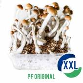 PF Original XL Mycelium box (2100 ML)